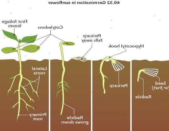 vad finns i ett frö